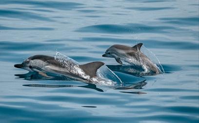 avvistamento delfini taranto